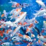 Tips for moving an Aquarium by Secure Moving Ltd